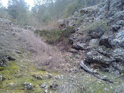 Imagen ZORRA