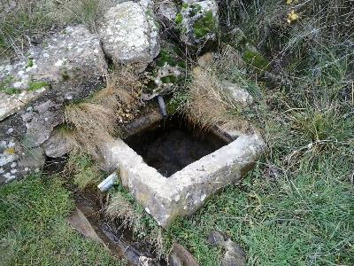 Imagen de PÁJAROS DE ARRIBA