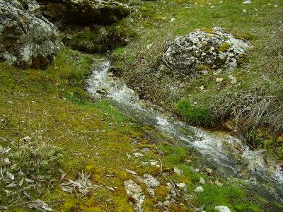 Imagen de GAVILÁN