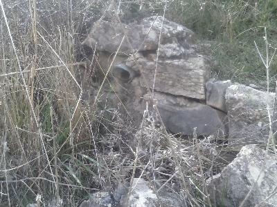 Imagen de PÁJARO